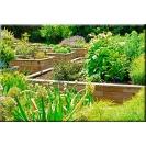 Herb Garden Boxs