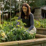 Como proteger los cultivos durante el invierno